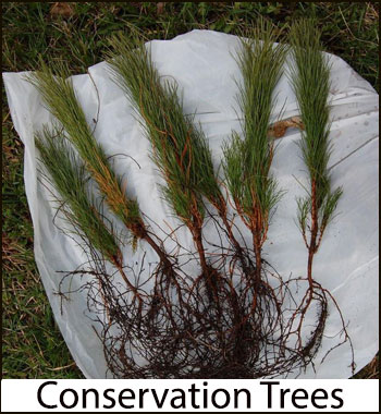 conservation trees page link