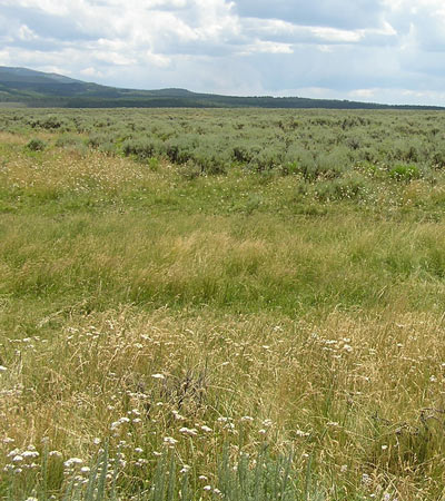 rangeland enhancement