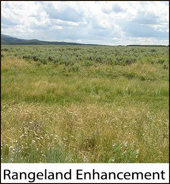 rangeland enhancement icon