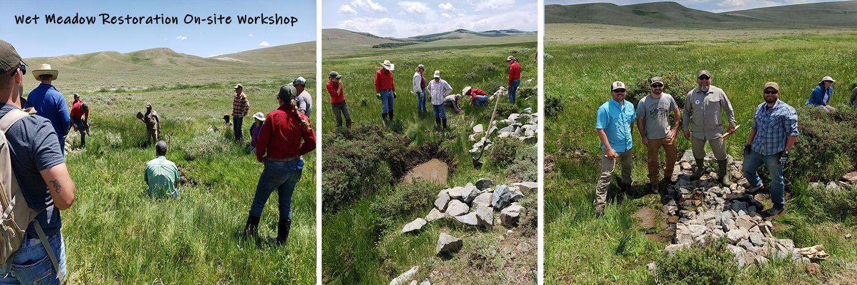 wet-meadow-restoration-workshop